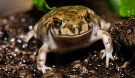 Colorful Backyard Toad Stock Photo