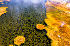 Colorful Bacteria Mat. In the Upper Geyser Basin in Yellowstone National Park Stock Photo