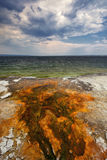 Colorful bacteria mats form in hot water runoff. Yellowstone Lake, West Thumb Geyser Basin, Yellowstone National Park, Wyoming Stock Image