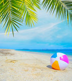 Colorful ball under a palm tree Royalty Free Stock Photos