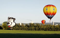 Colorful balloon flying. Pepe the Skunk hot air balloon (Marcos Antonio Bonimcontro of Brazil) and other balloons near PotashCorp in Penobsquis at the Atlantic Royalty Free Stock Images