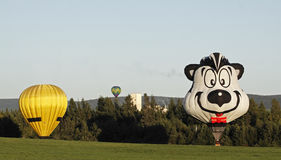 Colorful balloon landing. Pepe the Skunk hot air balloon (Marcos Antonio Bonimcontro of Brazil) and other balloons near PotashCorp in Penobsquis at the Atlantic Royalty Free Stock Photo