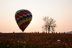 Colorful balloons  of the cosmos field at sunset. stock image