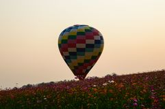 Colorful balloons of the cosmos field at sunset. royalty free stock image