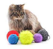 Сat and colorful balls. Сat and colorful balls on white background Royalty Free Stock Image