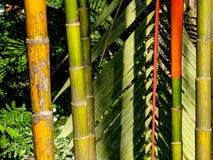 Colorful bamboo barks royalty free stock photo
