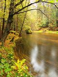Colorful bank of autumn river covered by orange beech leaves. Fresh green leaves on branches above water make colorful refle Royalty Free Stock Photo