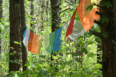Colorful Banners Hanging in Trees Stock Image