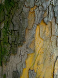 Colorful Bark Texture. Detail macro close up Stock Photography