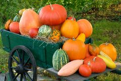 Colorful batch of pumpkins. Colorful pile of different pumpkins on a vintage cart royalty free stock photography