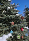 Colorful baubles on conifer Stock Image