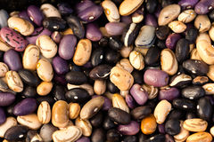 Colorful beans background ,close up Stock Image