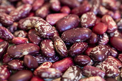 Colorful beans. Raw food, agriculture Stock Image