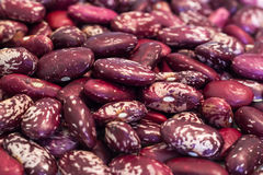 Colorful beans. Raw food, agriculture Stock Photography