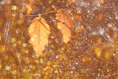 Colorful beautiful autumn leaves on tree branch with texture overlay Stock Photos