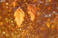 Colorful beautiful autumn leaves on tree branch with texture overlay Stock Photography