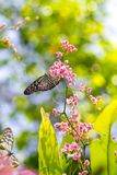 Colorful and beautiful butterflies Royalty Free Stock Image