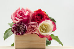 Colorful, beautiful, delicate roses on a wooden surface Royalty Free Stock Photo