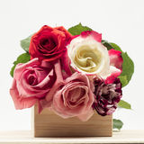 Colorful, beautiful, delicate roses on a wooden surface Royalty Free Stock Images