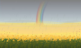 Colorful Beautiful Field Landscape Background. With sunflowers and rainbow after rain vector illustration Royalty Free Stock Images