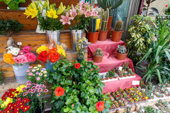 Colorful beautiful flowers from a shop Stock Photo