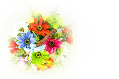 Colorful beautiful flowers. On a white background Stock Image