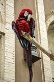 Colorful beautiful parrot ,red macaw parrot sitting on the branch against a brick wall stock photos
