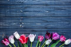 Colorful beautiful pink violet tulips on gray wooden table. Valentines, spring background. floral mock up. with copyspace stock image