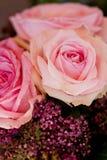 Colorful beautiful roses flowers macro closeup card background Stock Photo