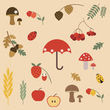 Colorful beautiful set of summer. Beautiful set  summer in the forest Royalty Free Stock Images