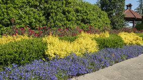 Colorful bed Dallas Arboretum and Botanical Garden. Pictured is a colorful bed of green, red, yellow and blue at the Dallas Arboretum and Botanical Garden in Royalty Free Stock Image