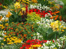 Colorful bed of flowers. Carinthia, Austria Stock Photography