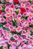 Bed of roses 1 Royalty Free Stock Photos