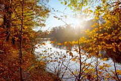 Colorful beech leaves on the sun and forest lake. stock images