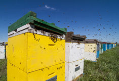 Colorful beehives aligned in a green field Royalty Free Stock Images