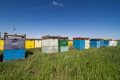 Colorful beehives aligned in a green field Stock Photos