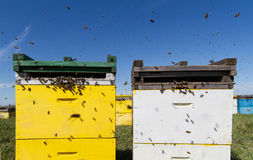 Colorful beehives aligned in a green field Stock Image