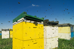 Colorful beehives aligned in a green field. Horizontal front view of a row of colored beehives aligned in a field with bees swarming around Stock Photography