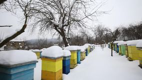 Colorful beehives covered in snow stock video footage