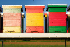 Colorful beehives with domesticated honeybees in flight Royalty Free Stock Photo