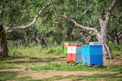 Colorful beehives in a field with olives trees. In Greece Royalty Free Stock Image