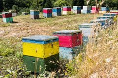 Beehives in Greece. Colorful beehives in a field with trees near Mount Olympus in Greece stock photos