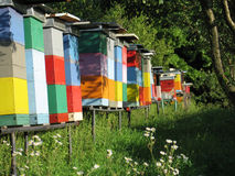 Colorful beehives on forest glade. Row of colorful beehives on forest glade, woods in background Stock Photography