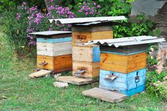 Colorful beehives with purple flowers. Rural beekeeping. stock photos
