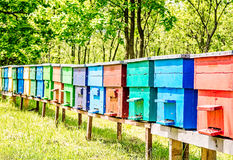 Colorful Beehives in a Row Stock Image