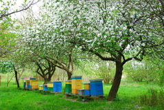 Colorful beehives in spring orchard stock images