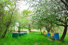 Colorful beehives in spring orchard Royalty Free Stock Photos