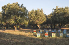 Colorful beehives Royalty Free Stock Photography