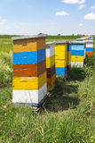Colorful beehives Royalty Free Stock Images