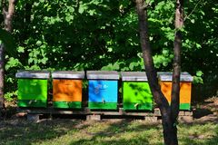 Colorful beehives in the yard. Orange, green and blue beehives in the courtyard surrounded by nuts. Bright morning sun royalty free stock photos